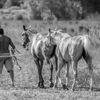 по полю коней водили... :: Svetlana AS