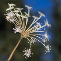 """И зимой можно найти """"цветы""""! :: Julia Martinkova"""