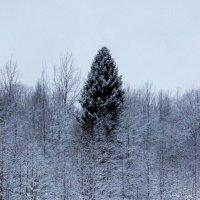Кремлёвская ёлка. :: Андрей Скорняков