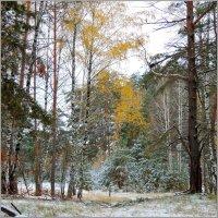 В зиму :: Николай Дементьев