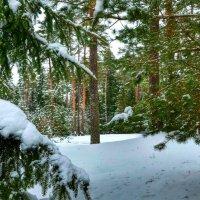 В предрождественском лесу :: Милешкин Владимир Алексеевич