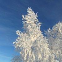Снегурочка. :: nadyasilyuk Вознюк