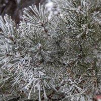 Зимние красоты,,,, :: александр варламов