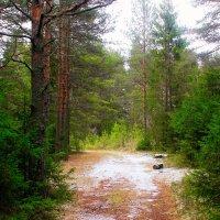 по лесной тропинке :: Сергей Кочнев