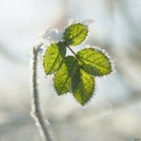 Зимний хрусталь :: Swetlana V
