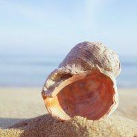 Под шум морских волн :: Swetlana V