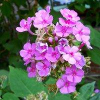 Цветы :: Виктор Шандыбин