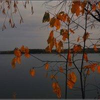 Осенняя грусть :: Владимир Холодный