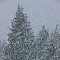Ёлки и снежинки :: Михаил Лобов (drakonmick)