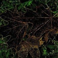 Кленовые листья :: Нина Корешкова