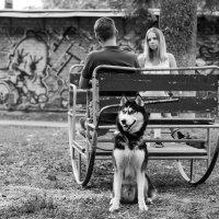 Любовь, дружба, верность :: Андрей Майоров