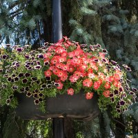 Цветы в горшке. :: Артём Шкляр