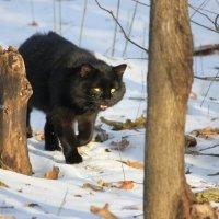 На охоту за птичками... :: Ната Волга