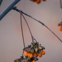 Птичкам на зиму :: Татьяна Огаркова