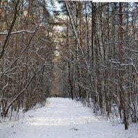 И у нас зима ...  вот :: Алексей Михалев
