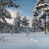 Всюду снег... кругом всё тихо... :: Татьяна А
