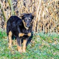 Брошенный щенок. :: Геннадий Оробей