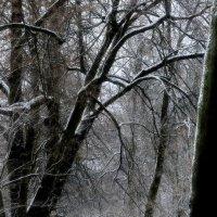 После снегопада..... :: Юрий Цыплятников