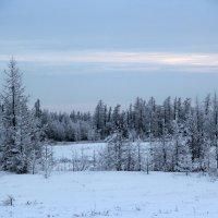 Природа полярного круга :: Marina Pelymskaya