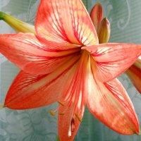 Цветок :: Виктор Шандыбин