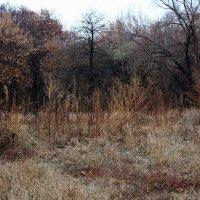 Черный лес :: Ирина Сивовол