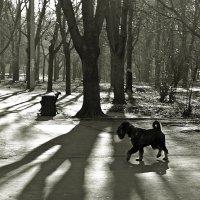 на солнечной поляночке, баранкой выгнув хвост... :: Александр Корчемный