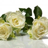Розы :: Alex Bush