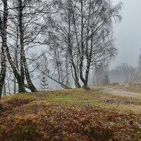 Туман  зимой. :: Валера39 Василевский.