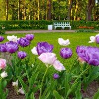 Тюльпаны. :: Лия ☼