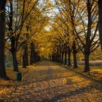 « Я иду по осенней аллее, А кругом листопад, листопад…» :: Андрей Нибылица