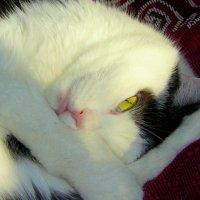 -поспать дайте! :: Александр Прокудин