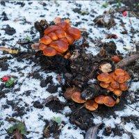 Ранний снег, поздний урожай :: Оксана Лада