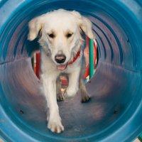 Dog :: Никола Н