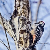 Фото птиц :: Анатолий Иргл