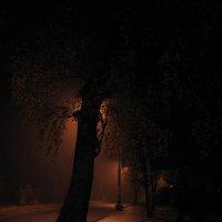 Туманный вечер.. :: Elena N