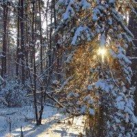 К закату пробиралось солнце... :: Лесо-Вед (Баранов)