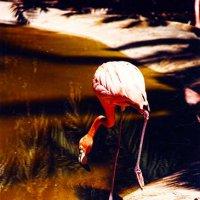 Фламинго :: Marika Hexe
