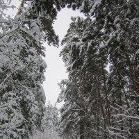 """Серия """" В лесу """" . Арка . :: Мила Бовкун"""