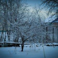 Зима :: Алия Янг