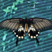 выставка бабочек :: оксана рахова