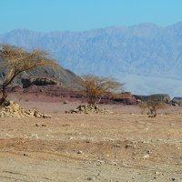 Пустыня :: Николай Танаев