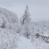 Серый день :: Валерий Талашов