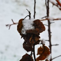 Осень встречает зиму... :: Aлександр **