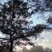 Сквозь туман пробиваются слабые солнечные лучи. :: Людмила Ларина