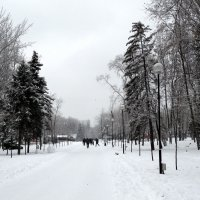 Декабрь в парке 2014... :: Тамара (st.tamara)