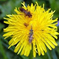 три букашки на один цветок :: Александр Прокудин