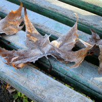 Листья. :: Люда Валяшки