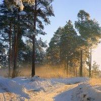 Зимнее утро :: Павлова Татьяна Павлова