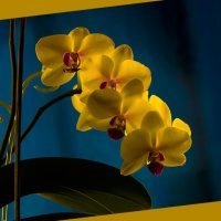 Орхидея. :: Юрий Харченко