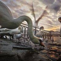 Путешествие с дикими гусями :: Denis Makarenko